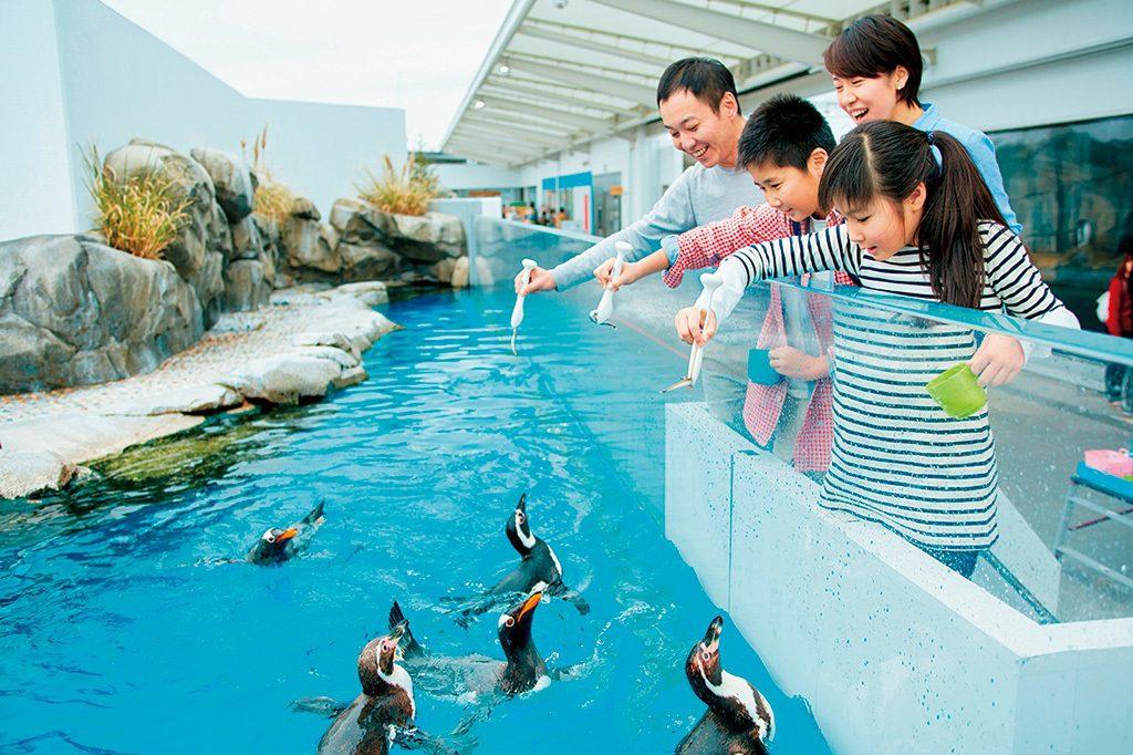 仙台うみの杜水族館のイルカ・アシカパフォーマンスは東北最大級!ふれあい体験も充実 | るるぶKids