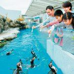 仙台うみの杜水族館のイルカ・アシカパフォーマンスは東北最大級!ふれあい体験も充実