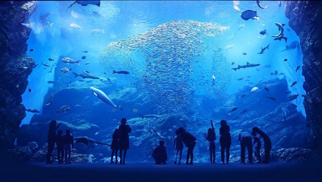 三陸の海を再現した巨大水槽/仙台うみの杜水族館(宮城県/仙台市)