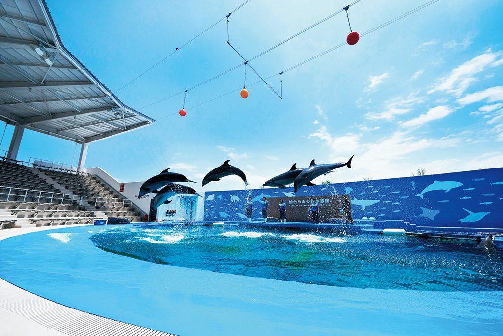 イルカやアシカのパフォーマンスが行われる「うみの杜スタジアム」/仙台うみの杜水族館(宮城県/仙台市)