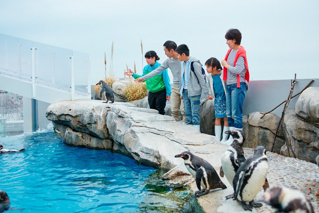 ペンギンやカワウソなどとふれあえる体験プログラム/仙台うみの杜水族館(宮城県/仙台市)