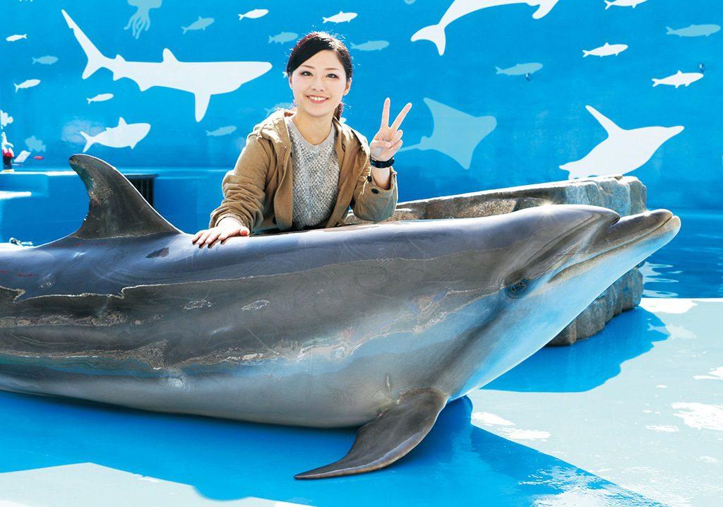 イルカにタッチ&フォト/仙台うみの杜水族館(宮城県/仙台市)