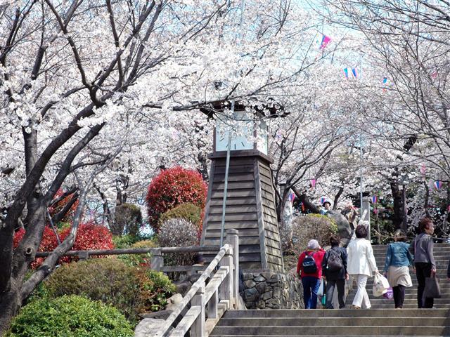 桜の名所としても知られる園内/飛鳥山公園(東京都/北区)