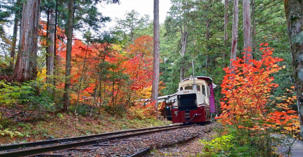 雄大な美林を縫って走る森林鉄道/赤沢森林鉄道(長野県/上松町)