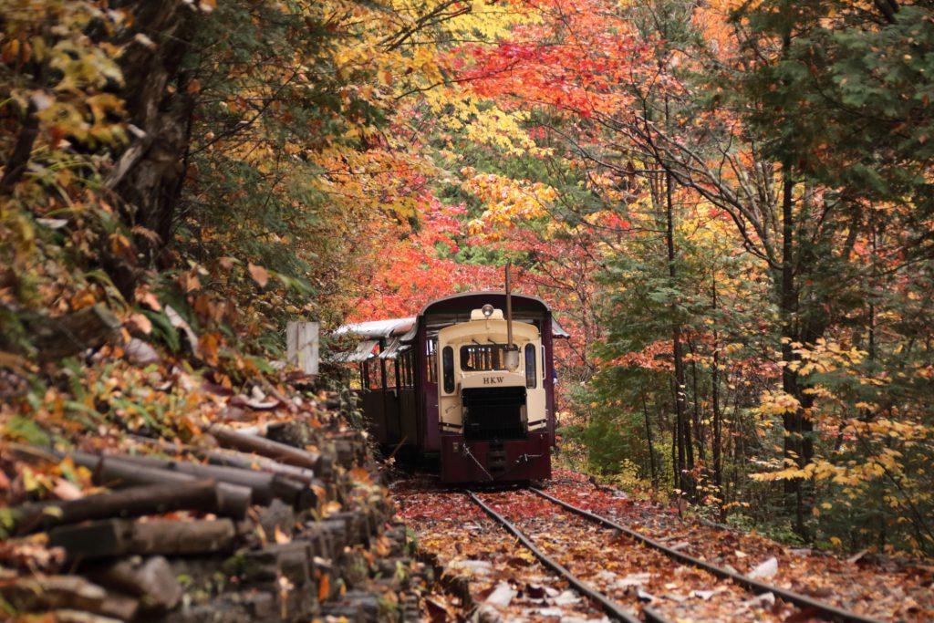 紅葉の中を走るトロッコ列車/赤沢森林鉄道(長野県/上松町)