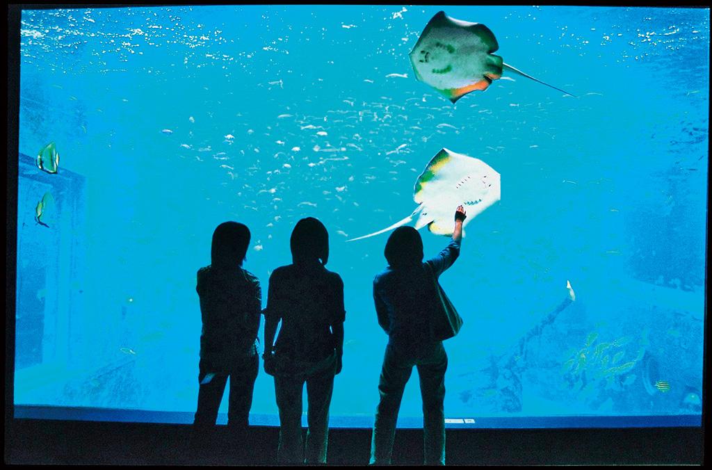 日本一標高が高い海水の水族館/箱根園水族館(神奈川県/箱根町)