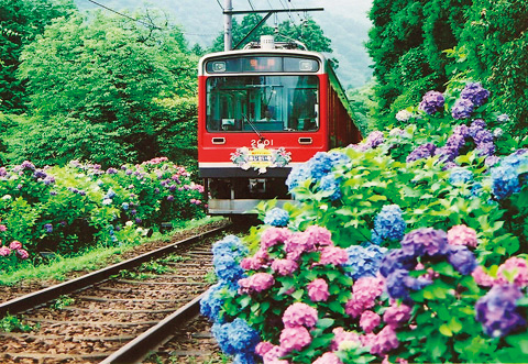 四季折々の景色を楽しめるスイッチバック方式の山岳鉄道/箱根登山電車(神奈川県/箱根町)