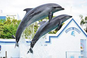 関東のイルカショー&パフォーマンスがあるおすすめ水族館7選