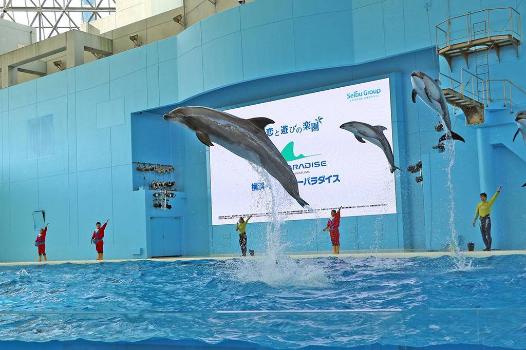 海の動物たちのショー デイショー/横浜・八景島シーパラダイス(神奈川県/横浜市)