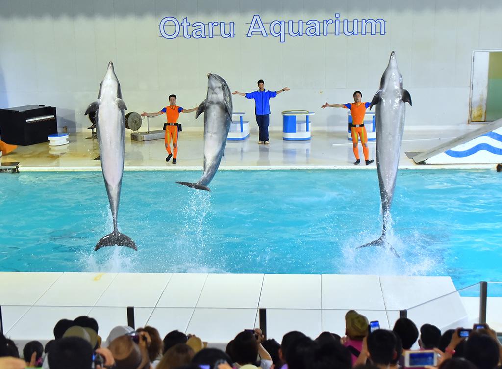 オタリア・イルカショー/おたる水族館(北海道/小樽市)