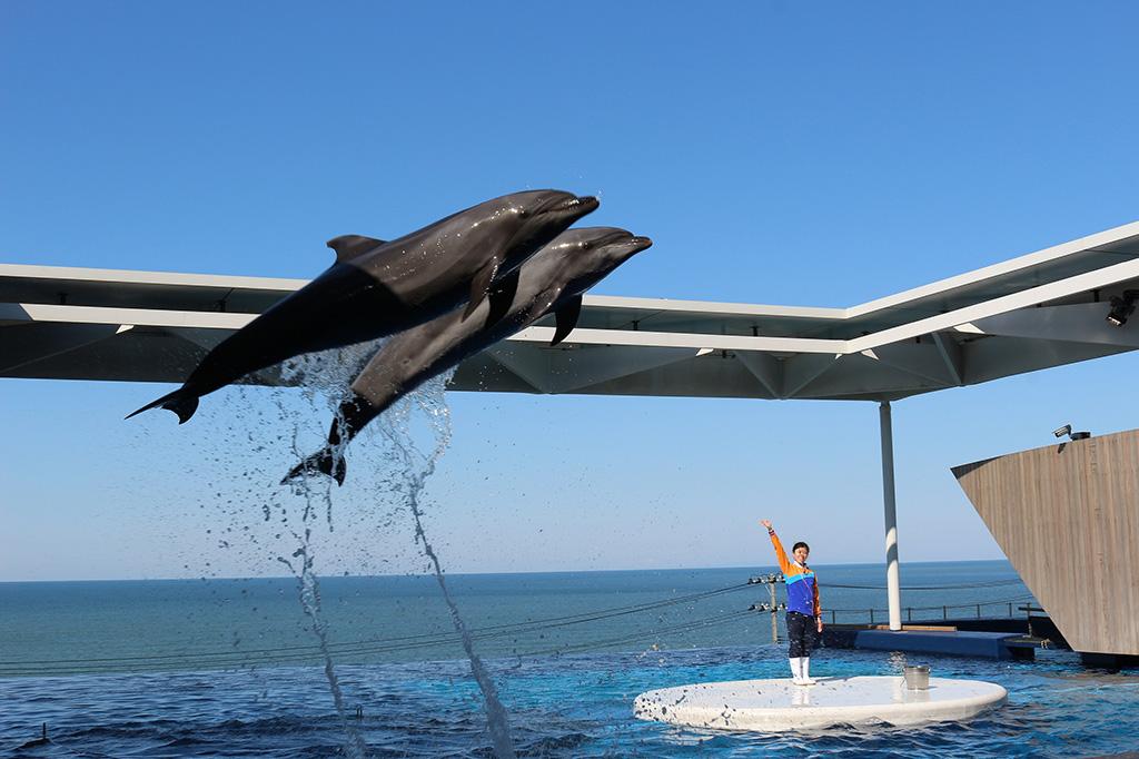 「ドルフィンパフォーマンス」日本海をバックにイルカがジャンプする風景/上越市立水族博物館 うみがたり(新潟県/上越市)