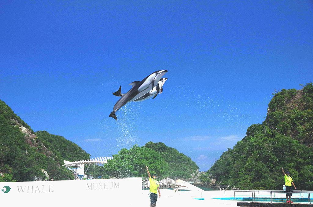 空高くジャンプするカマイルカ/太地町立 くじらの博物館(和歌山県/太地町)