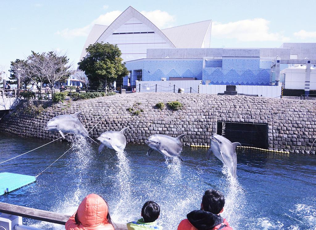 青空イルカウォッチング/いおワールド かごしま水族館(鹿児島県/鹿児島市)