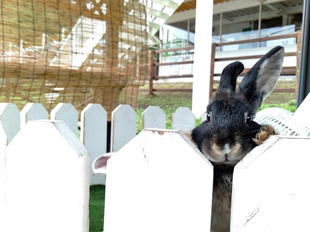 ウサギなど約15種類の動物と触れ合える/池の平ホテル(長野県/立科町)