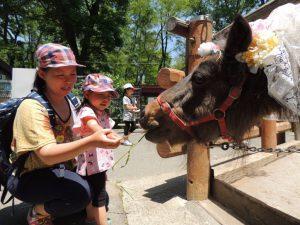 長野市茶臼山動物園で、レッサーパンダなどの自然な姿を観察&小動物とのふれあい