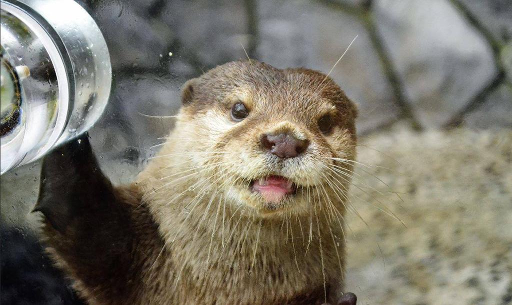 カワウソと握手ができる水族館10選!エサをあげたりふれあい体験が楽しい | るるぶKids