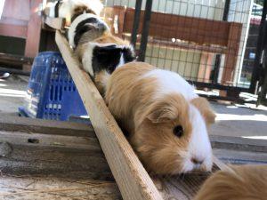 モルモットを抱っこ!市川市動植物園は、動物とのふれあい体験やミニ鉄道が人気