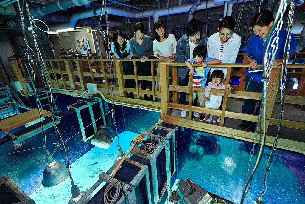 サンシャインラグーン水槽の上からエサやり体験/サンシャイン水族館(東京都/豊島区)