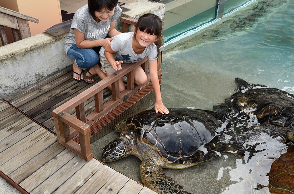 間近でウミガメにふれあう様子/新江ノ島水族館(神奈川県/藤沢市)