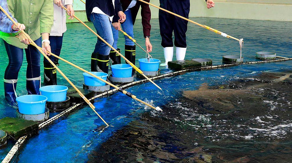 長い棒の先につけたエサを食べるエイ/鴨川シーワールド(千葉県)