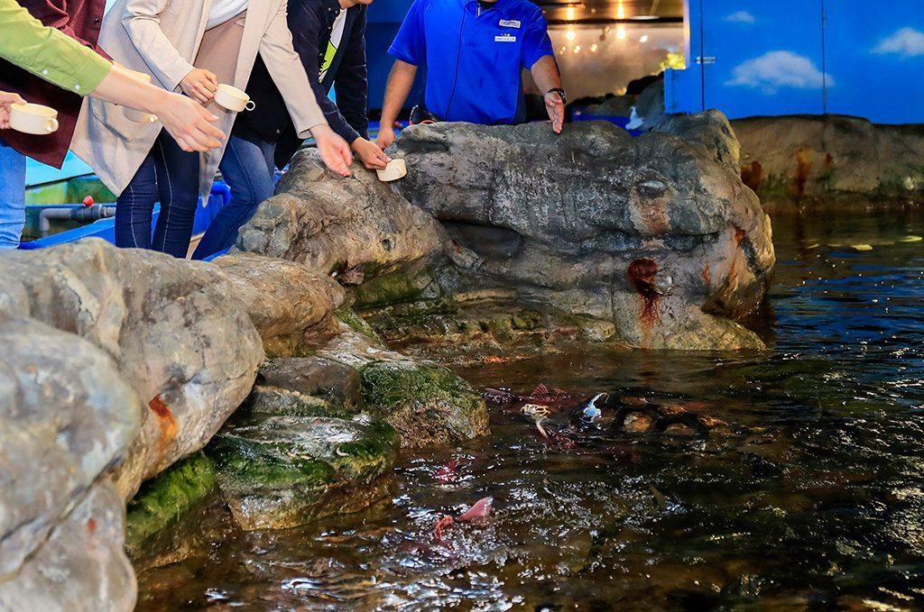 エサやりでいっせいに寄ってくる魚たち/鴨川シーワールド(千葉県/鴨川市)