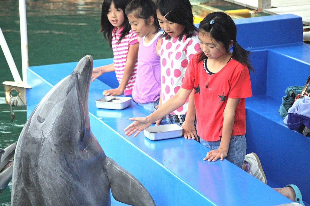 ふれあいの海でイルカにエサやり体験/下田海中水族館(静岡県/下田市)