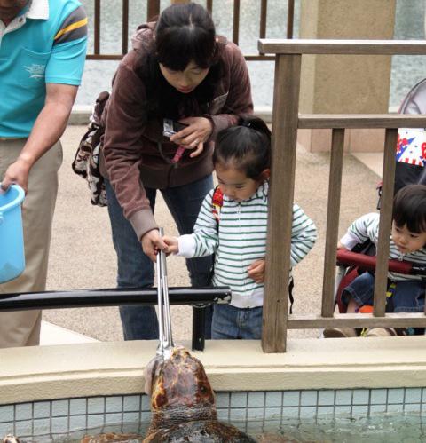 ウミガメのエサやり体験/下田海中水族館(静岡県/下田市)