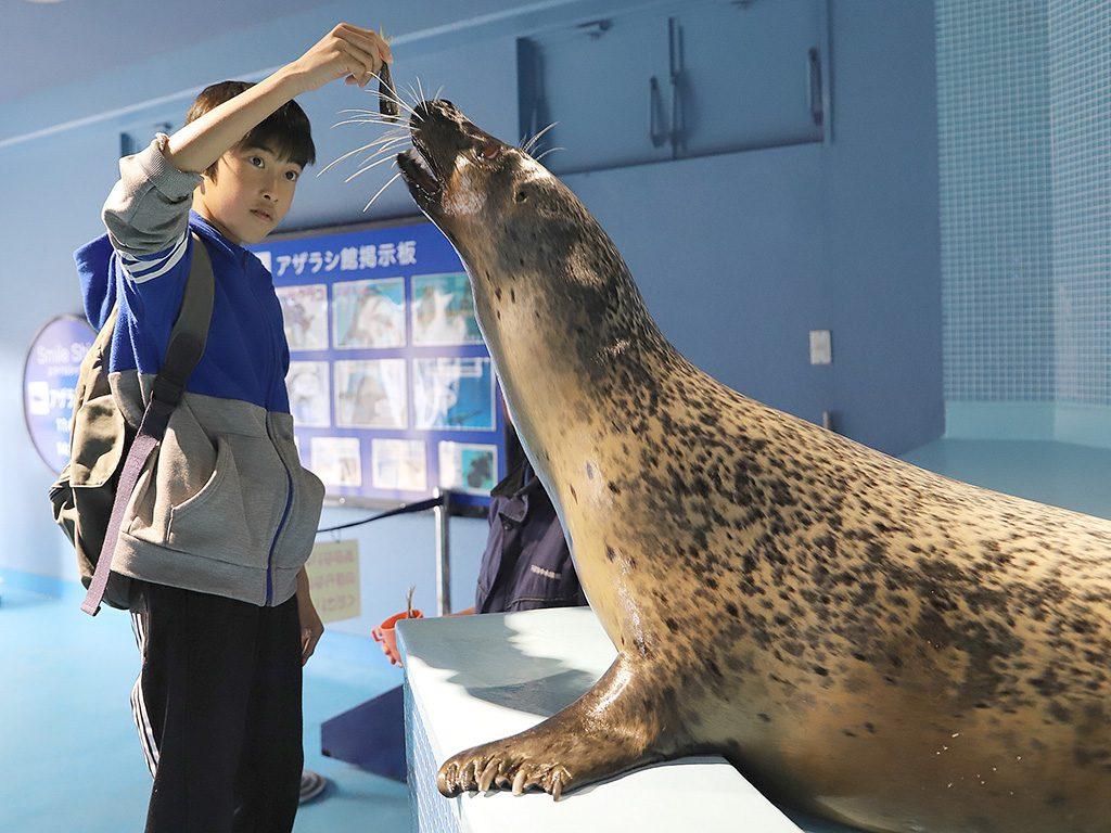 エサやりでゴマフアザラシに大接近/下田海中水族館(静岡県/下田市)