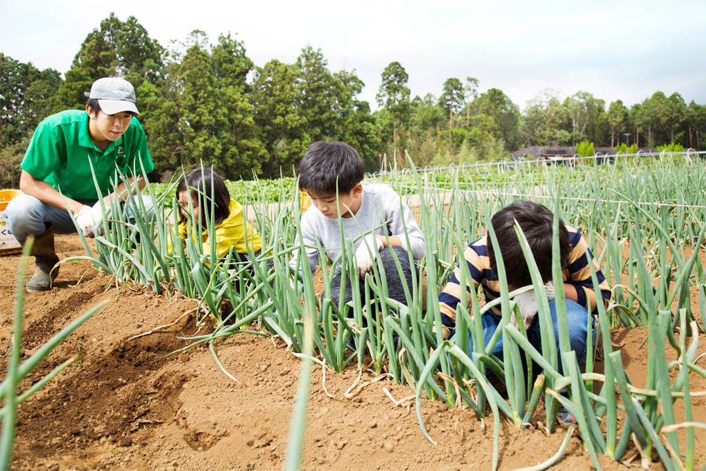 長ネギを慎重に抜く子供たち(千葉県香取市・ザファーム)