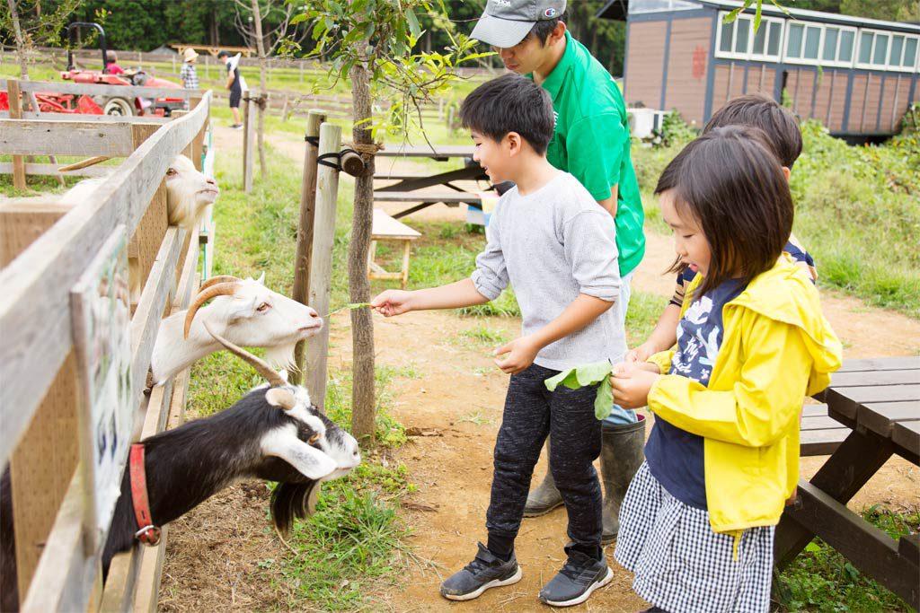 ヤギにエサやりをする子どもたち(千葉県香取市・ザファーム)