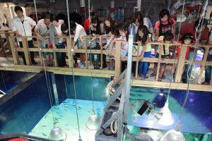 関東のバックヤードツアーがある水族館10選!裏側に潜入できる人気の体験