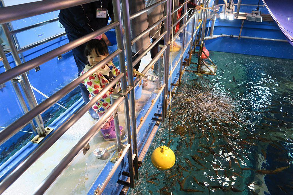 水槽の上からエサやり体験する様子/青森県営浅虫水族館(青森市)