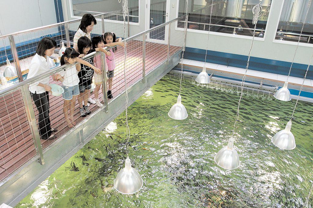 エサやり体験でイワシたちが寄ってくる様子/越前松島水族館(福井県/坂井市)