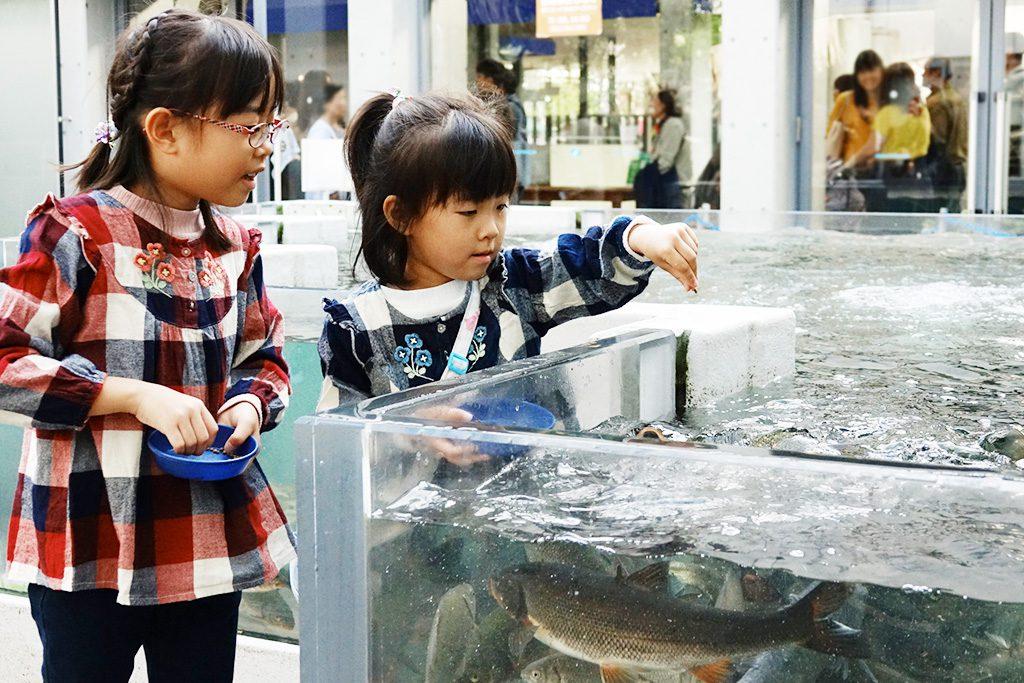 エサに寄ってくる魚たち/世界淡水魚園水族館 アクア・トト ぎふ(岐阜県/各務原市)