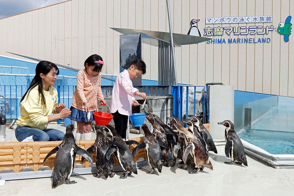 エサやり体験のエサに近づくペンギンたち/志摩マリンランド(三重県/志摩市)