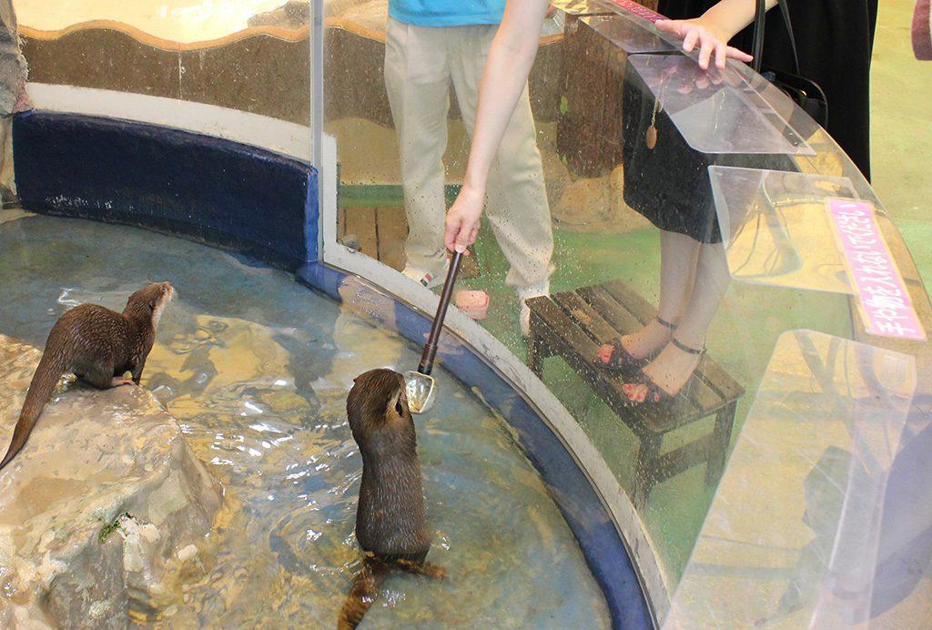 エサやり体験でカワウソにエサをあげる様子/新屋島水族館(香川県/高松市)