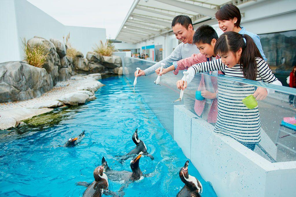 エサに寄ってくるペンギンたち/仙台うみの杜水族館(宮城県)