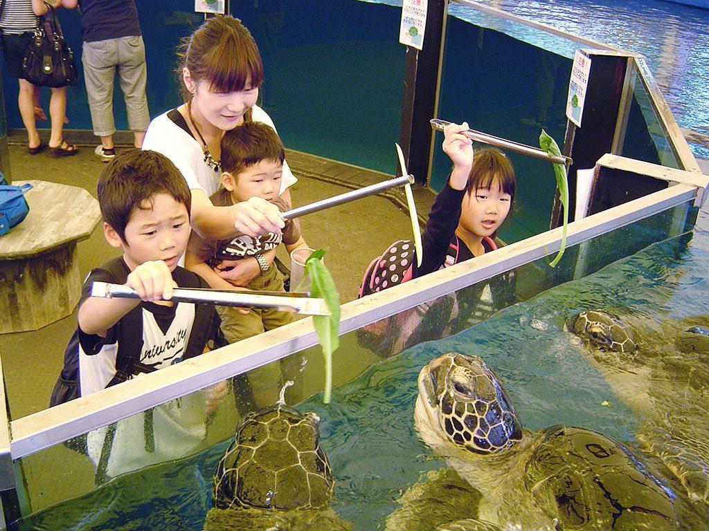 トングでエサをもらうアオウミガメ/越前松島水族館(福井県/坂井市)