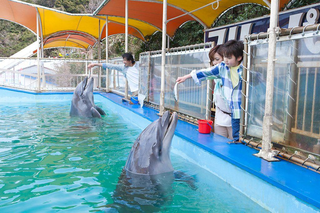 エサやり体験でエサをもらうイルカ/鳥羽湾めぐりとイルカ島(三重県)