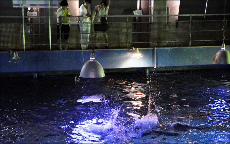 バックヤードからエサやり体験/串本海中公園センター(和歌山県)