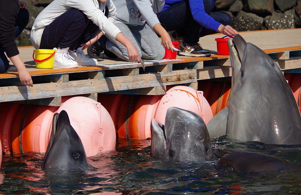エサやり体験でエサを食べにくるイルカとクジラ/太地町立 くじらの博物館(和歌山県)