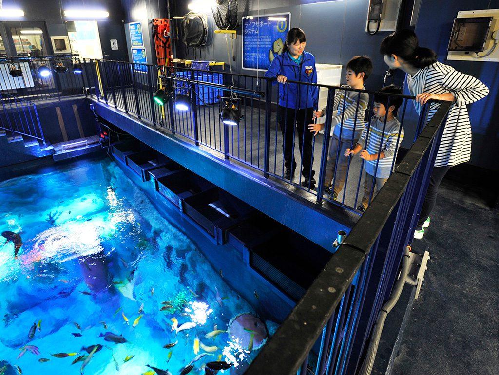 バックヤード体験ツアーで水槽の上から観察する様子/シーライフ名古屋(愛知県)