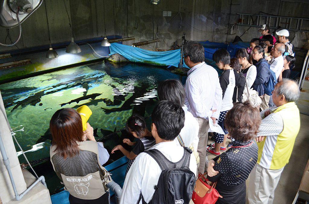 うら側探検ツアーで水族館の裏側を観察/鳥羽水族館(三重県)