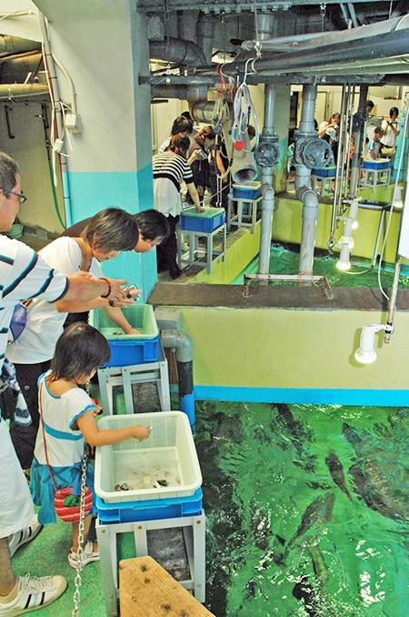 水族館裏側探検でエサやり体験/志摩マリンランド(三重県)