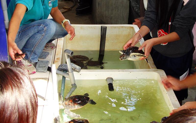 バックヤードツアーでのウミガメの赤ちゃん/串本海中公園センター(和歌山県)