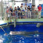 全国のバックヤードツアーがある水族館33選!普段入れない裏側に潜入