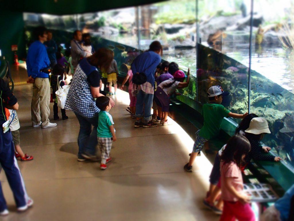 相模川や相模湾に生息する水生生物を飼育・展示している館内の様子/相模川ふれあい科学館(神奈川県/相模原市)