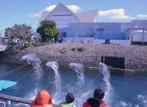 九州最大級「いおワールド かごしま水族館」でイルカやジンベエザメに感動しよう