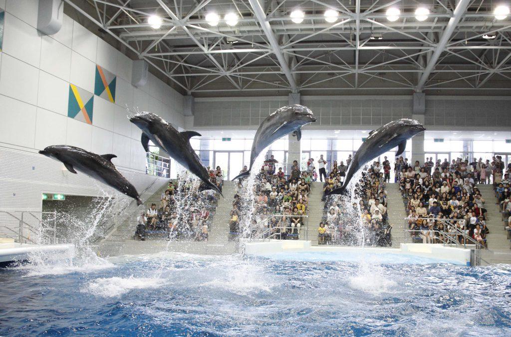 観客も参加できるイベント「いるかの時間」/いおワールド かごしま水族館(鹿児島県/鹿児島市)