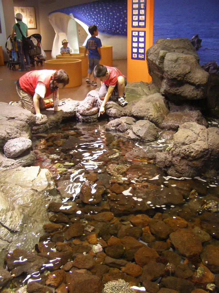 1階「ワクワクはっけんひろば」の様子/いおワールド かごしま水族館(鹿児島県/鹿児島市)